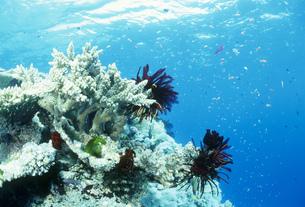青い海とサンゴの写真素材 [FYI03981774]