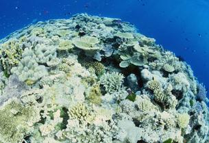 サンゴ礁の写真素材 [FYI03981781]