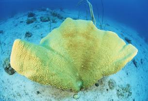 サンゴの写真素材 [FYI03981784]