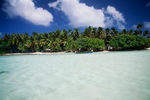 アルノ環礁 リーフの写真素材 [FYI03981826]