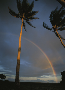 ヤシの木と虹 トラック諸島の写真素材 [FYI03981888]