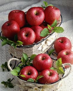 リンゴ「ふじ」の写真素材 [FYI03982093]