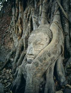 ワット・プラ・マハタートの石頭仏の写真素材 [FYI03982102]
