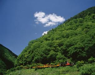 新緑を行く嵯峨野トロッコ列車の写真素材 [FYI03983238]
