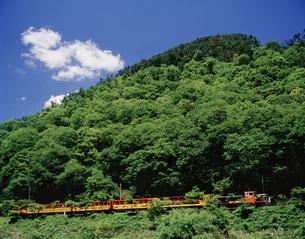 保津峡を行く嵯峨野トロッコ列車の写真素材 [FYI03983240]