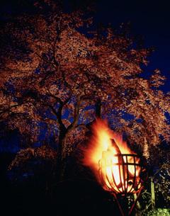 夜桜嵯峨野の写真素材 [FYI03983278]
