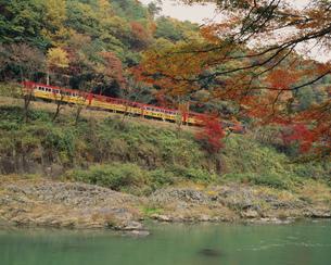秋のトロッコ列車の写真素材 [FYI03983284]