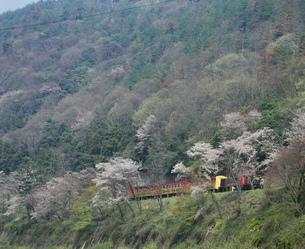 春のトロッコ列車の写真素材 [FYI03983285]
