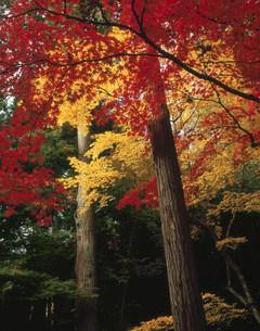弁財天の秋の写真素材 [FYI03983361]