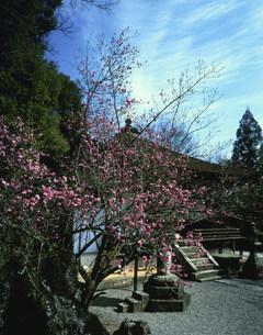 石山寺の写真素材 [FYI03983368]