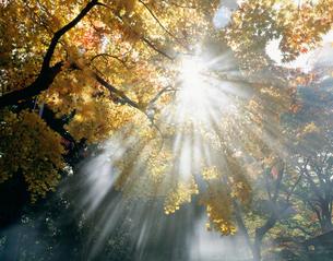 二尊院秋の斜陽の写真素材 [FYI03983372]