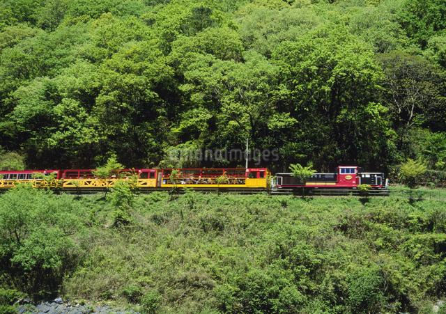 嵯峨野観光鉄道 春のトロッコ列車の写真素材 [FYI03983381]