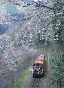 嵯峨野観光鉄道トロッコと桜の写真素材 [FYI03983400]