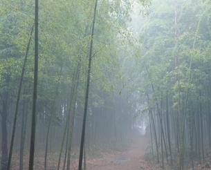 嵯峨野の竹林の写真素材 [FYI03983445]