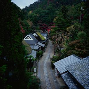 秋の嵯峨野散策路の写真素材 [FYI03983453]