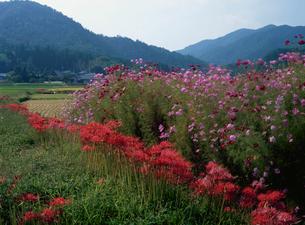 秋の畑の写真素材 [FYI03983461]