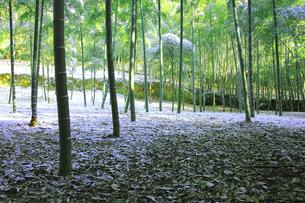 雪と竹林の写真素材 [FYI03983470]