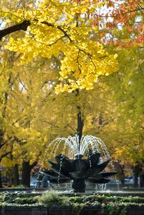 秋の東本願寺前の噴水の写真素材 [FYI03983652]