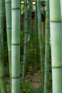 松花堂庭園の竹林の写真素材 [FYI03983721]