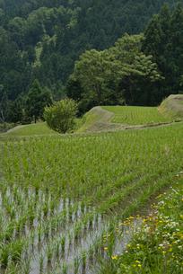 畑の棚田の写真素材 [FYI03983735]