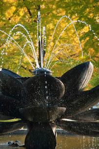 東本願寺前の噴水とイチョウの紅葉の写真素材 [FYI03983767]