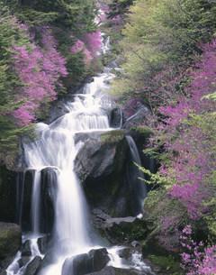 山ツツジが咲く奥日光竜頭の滝の写真素材 [FYI03983911]