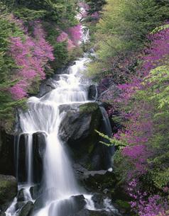 山ツツジが咲く奥日光竜頭の滝の写真素材 [FYI03984121]