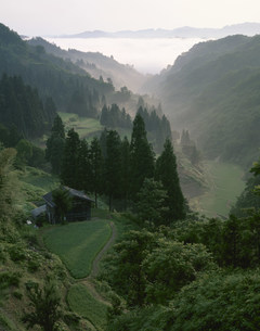 朝もやの流れる山間の棚田の写真素材 [FYI03984893]