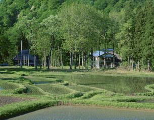 新緑の山間の農家の写真素材 [FYI03984894]