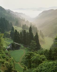 朝もやの流れる山間の棚田の写真素材 [FYI03984900]