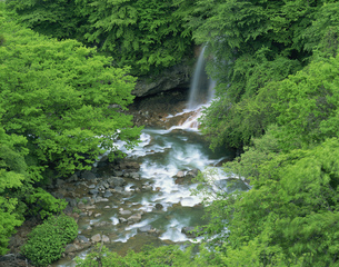 松川渓谷の流れ 東八幡平の写真素材 [FYI03984905]