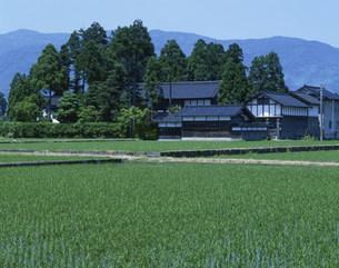 水田と農家の写真素材 [FYI03984967]