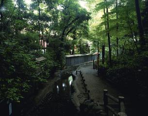 国分寺真姿の池湧水 お鷹の道の写真素材 [FYI03985008]