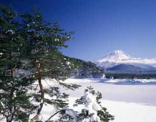 松の木と雪の精進湖と富士山の写真素材 [FYI03985028]