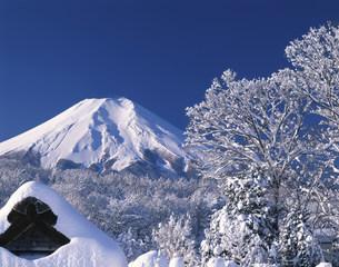樹海と富士山の写真素材 [FYI03985034]