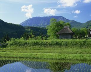 新緑の大山とわらぶき小屋の写真素材 [FYI03985059]