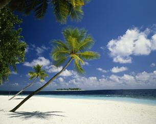 ヤシの木の浜辺と小島の写真素材 [FYI03985184]