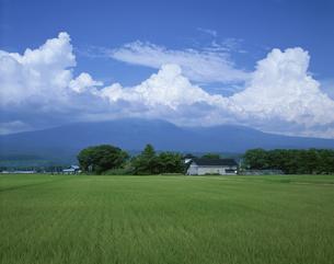 緑の稲田と鳥海山と夏雲  7月の写真素材 [FYI03985201]