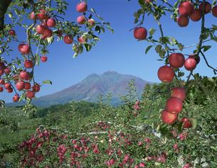リンゴと岩木山 10月の写真素材 [FYI03985206]