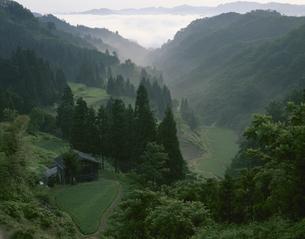 朝もやの流れる山間の棚田の写真素材 [FYI03985215]