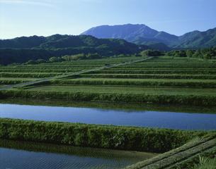 棚田と大山 5月 鳥取県の写真素材 [FYI03985229]