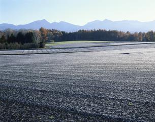 霜の降りた朝の高原の畑 長野県の写真素材 [FYI03985231]