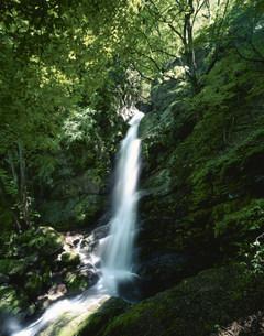 秩父不動の滝の写真素材 [FYI03985292]