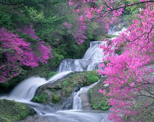 日光竜頭の滝とヤシオツツジの写真素材 [FYI03986112]