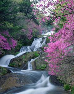竜頭の滝とヤシオツツジの写真素材 [FYI03986120]