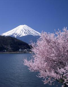 富士と桜 河口湖の写真素材 [FYI03986134]