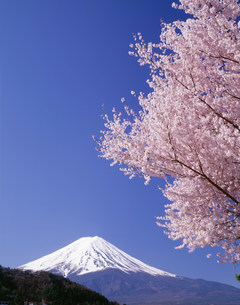 富士と河口湖と桜の写真素材 [FYI03986135]