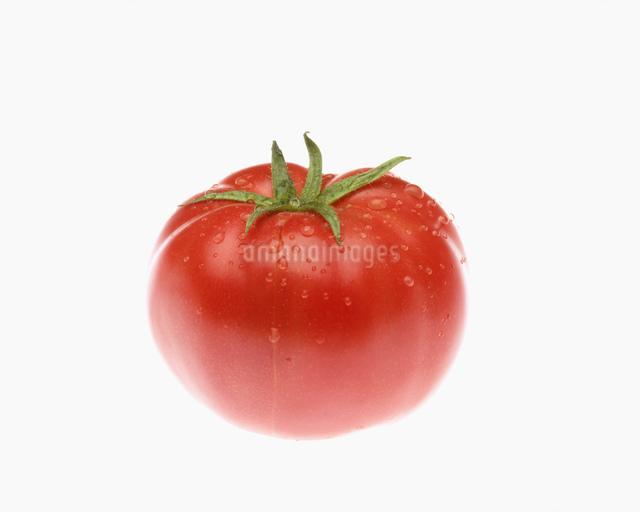 トマトの写真素材 [FYI03986320]