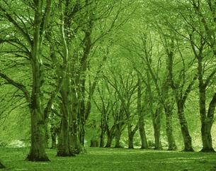 緑の並木道の写真素材 [FYI03986368]