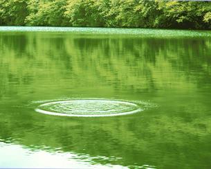 緑の沼の波紋 十和田 青森県の写真素材 [FYI03986369]